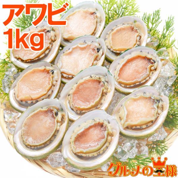 あわび Lサイズ 1kg 1箱12個入り(殻つきお刺身用アワビ 翡翠の瞳)|gourmet-no-ousama
