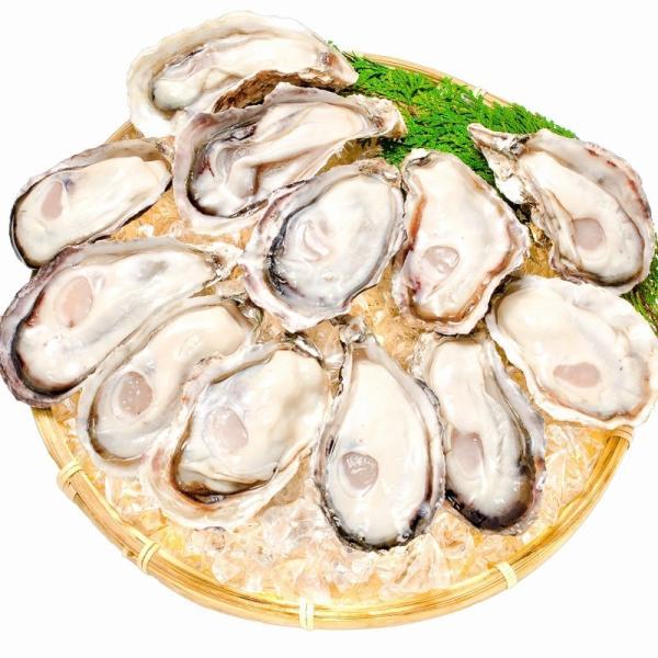 生牡蠣 殻付き 生食用カキ(12個入り 冷凍殻付き牡蠣 生食用) gourmet-no-ousama 02