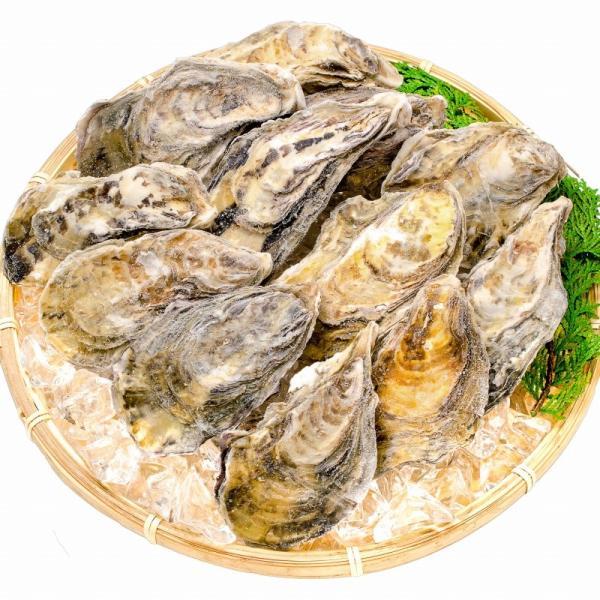 生牡蠣 殻付き 生食用カキ(12個入り 冷凍殻付き牡蠣 生食用) gourmet-no-ousama 04
