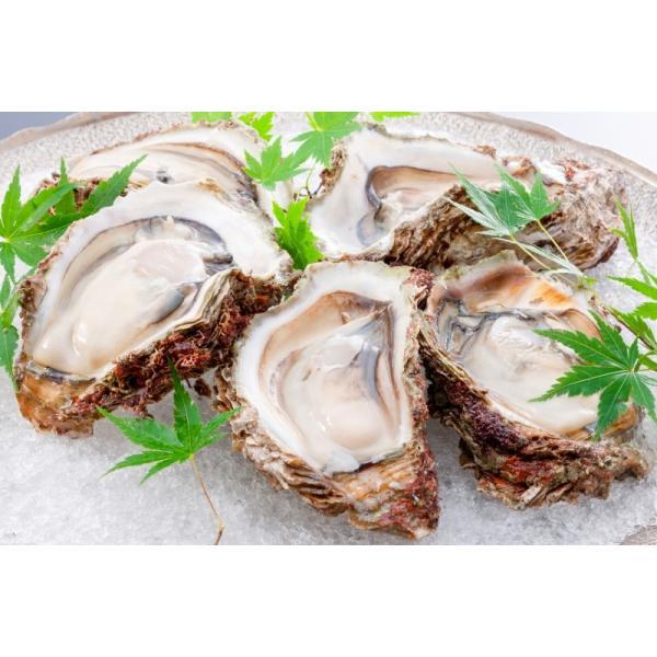生牡蠣 殻付き 生食用カキ(12個入り 冷凍殻付き牡蠣 生食用) gourmet-no-ousama 06