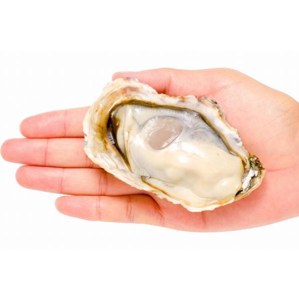 生牡蠣 殻付き 生食用カキ(12個入り 冷凍殻付き牡蠣 生食用) gourmet-no-ousama 09