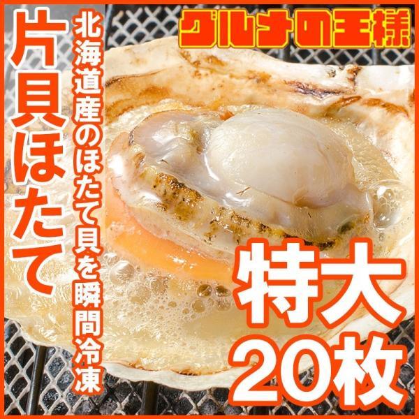 ホタテ ほたて 特大 片貝ほたて 20枚 10枚×2袋 (殻付きほたて 帆立 貝 バター焼き 浜焼き バーベキュー BBQ 業務用 築地市場 ギフト)|gourmet-no-ousama