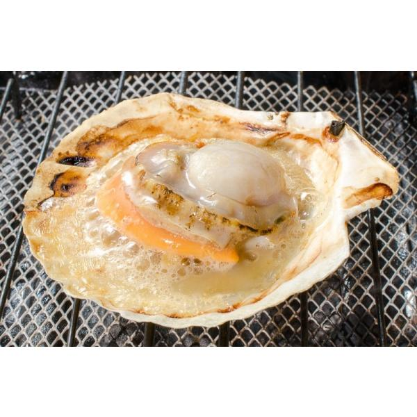 ホタテ ほたて 特大 片貝ほたて 20枚 10枚×2袋 (殻付きほたて 帆立 貝 バター焼き 浜焼き バーベキュー BBQ 業務用 築地市場 ギフト)|gourmet-no-ousama|05