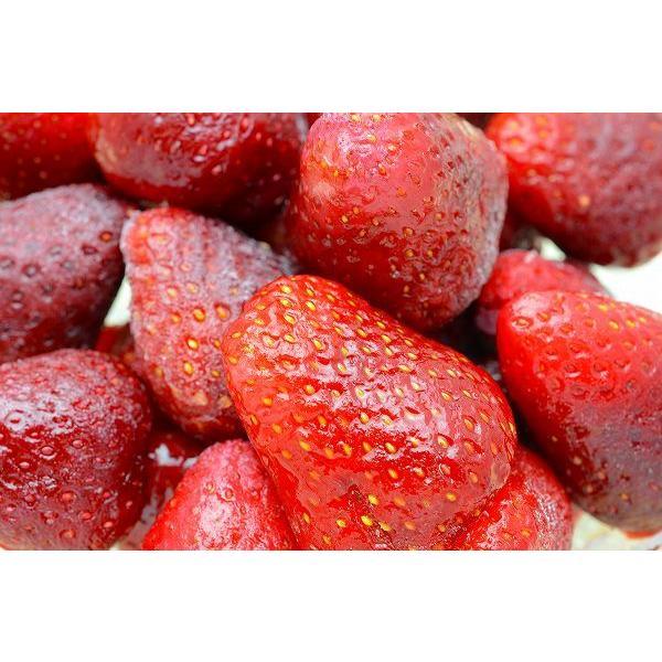 ストロベリー 冷凍ストロベリー 500g×1 苺 冷凍フルーツ ヨナナス|gourmet-no-ousama|02