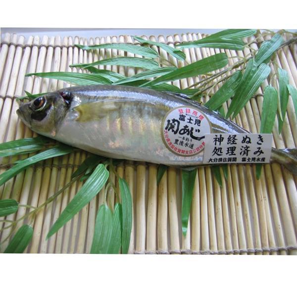 関アジ 中1尾 (鮮魚)(代引支払不可)(産地直送) 大分 (送料無料)