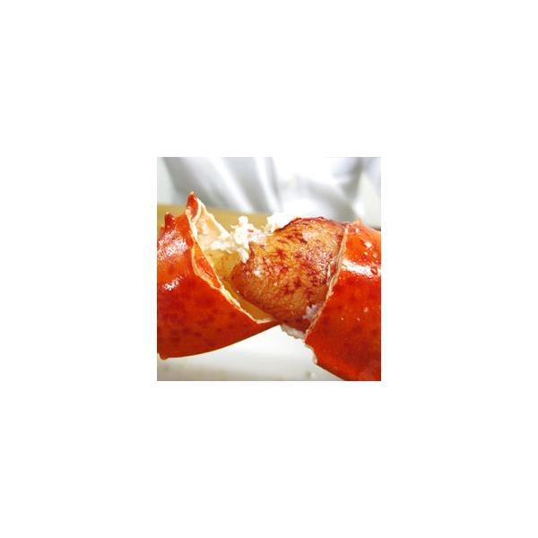 加熱済み カナダ産 [ オマール ロブスター 300g 10本セット ]  業務用 お買い得 ボイル 殻付|gourtairiku|02