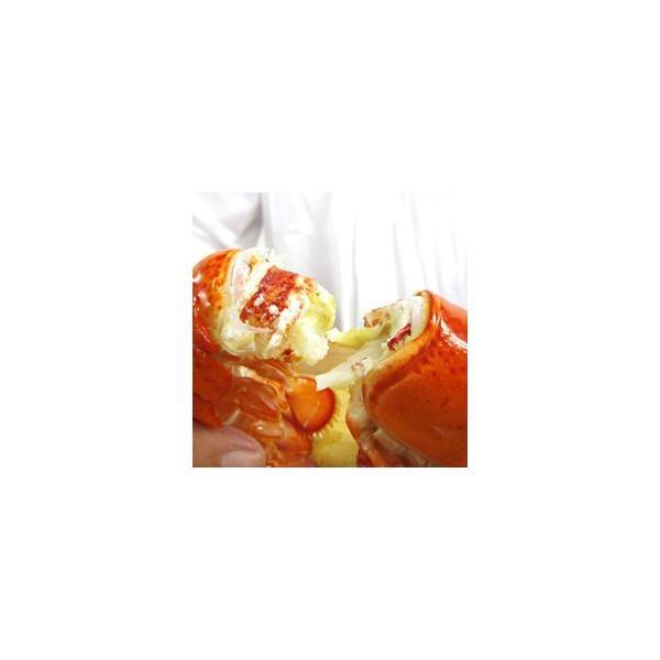 加熱済み カナダ産 [ オマール ロブスター 300g 10本セット ]  業務用 お買い得 ボイル 殻付|gourtairiku|03