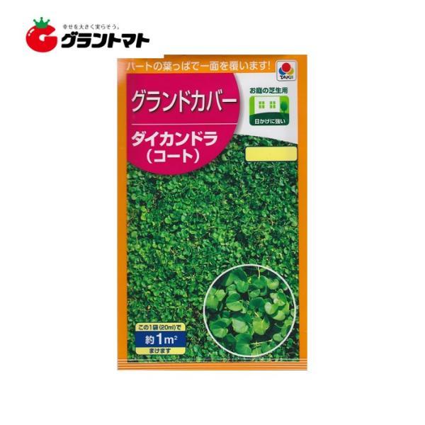 コート種子 (ダイカンドラ) 20ml 小袋 芝の種 (1m2分) タキイ種苗 【取寄商品】【ゆうパケット可】