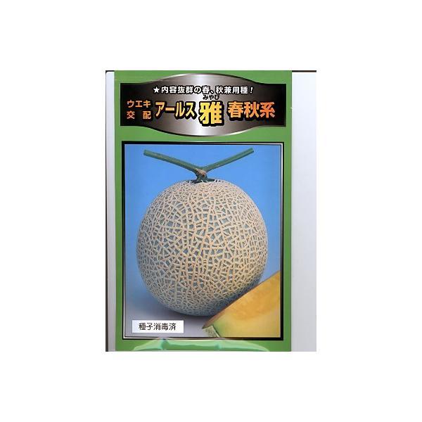 メロンの種 ウエキ交配・・・アールス 雅 春秋系・・・<横浜植木のメロン品種です。種のことならお任せグリーンデポ>