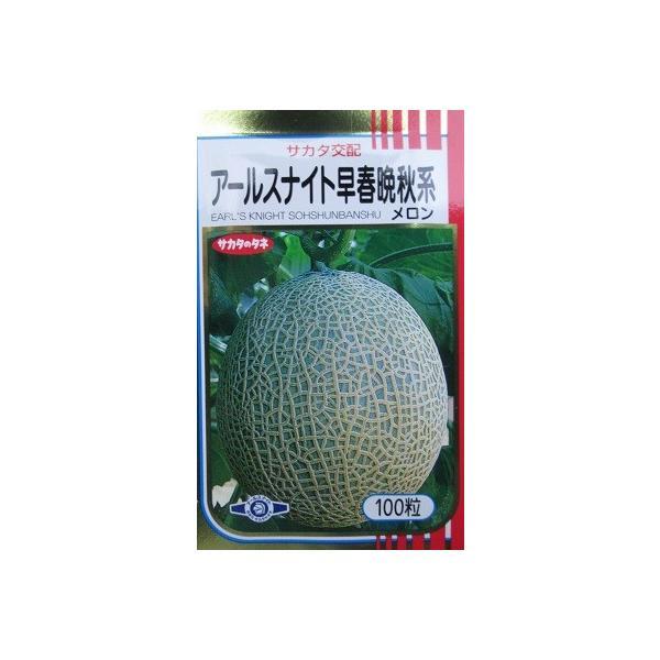 サカタ交配 アールスナイト早春晩秋系メロン  サカタのタネのネットメロン品種