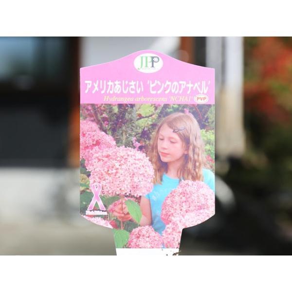 アメリカアジサイ/ピンクのアナベル 12cmポット 1本【1年間枯れ保証】【春に花が咲く木】|green-netbox