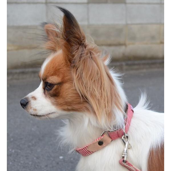 花柄!長さ調節可能ハーフチョークS トイプー、ダックス、ポメラニアン、パピヨンなど小型犬に! |groovygroupie|06