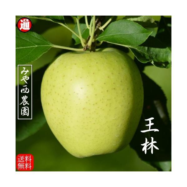 【予約】王林 りんご 青森 5kg 秀品 青森りんご 送料無料 宮西農園 青りんご 青森リンゴ りんご 贈答用