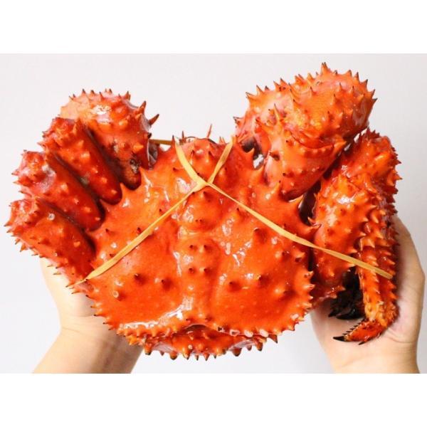 花咲ガニ 計2kg前後 (約1kg×2尾入) 特大 姿 ボイル 冷凍 北海道加工 送料無料|gurumeitiba|05