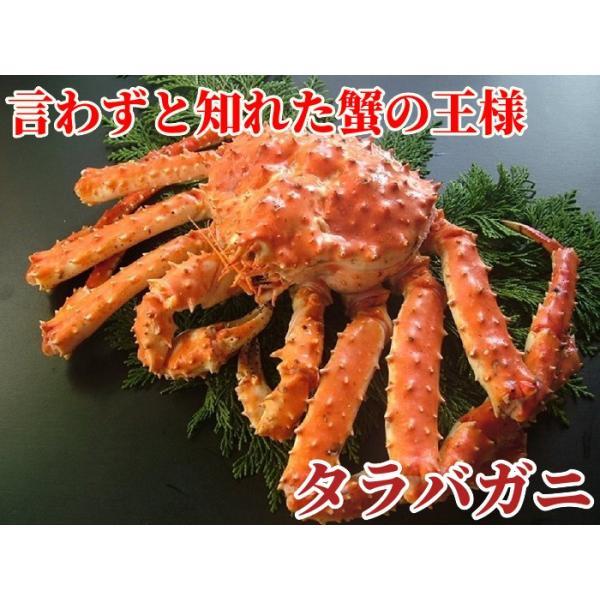 タラバガニ (たらば 蟹 かに カニ) 脚 足 ボイル 特大 2肩 計2kg前後 冷凍 北海道加工 5L 送料無料|gurumeitiba|02