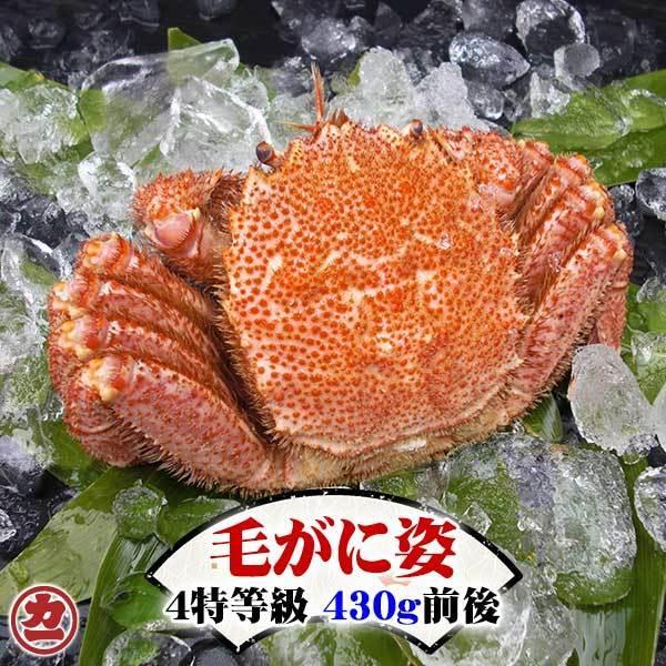 北海道産 毛がに姿 4特等級 1kg前後 1尾入 ボイル 冷凍 全国送料無料