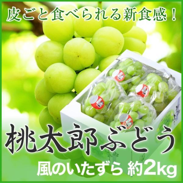 ぶどう 桃太郎ぶどう 風のいたずら ちょっと訳あり 3〜5房 約2kg 岡山県産 香川県産 夏ギフト 葡萄 ブドウ