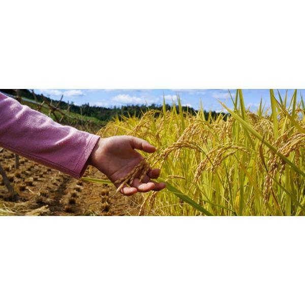 むつみ男米食べ比べセット 農薬不使用はぜかけ米3合&特別栽培米3合|hagi-life|02