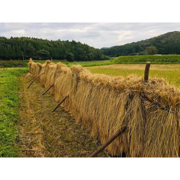 むつみ男米食べ比べセット 農薬不使用はぜかけ米3合&特別栽培米3合|hagi-life|03