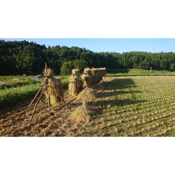 むつみ男米食べ比べセット 農薬不使用はぜかけ米3合&特別栽培米3合|hagi-life|04