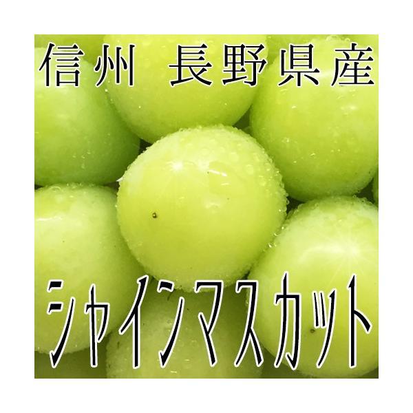信州 長野県産 【シャインマスカット】約1.5kg(3房) 種なしぶどう