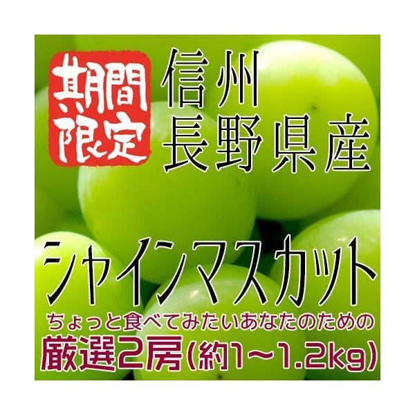 信州 長野県産 【シャインマスカット】約1kg(2房) 種なしぶどう 【送料無料】
