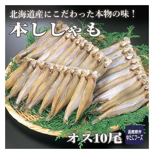 本ししゃも オス大サイズ(10尾)  国産 北海道産|hakodate-yutanifoods