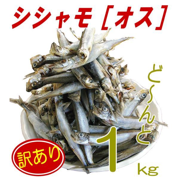 【シシャモ1kg(オス)】メスより美味しいという声も! メガ盛りカラフトししゃも1kg!! 訳あり ワケアリ わけあり