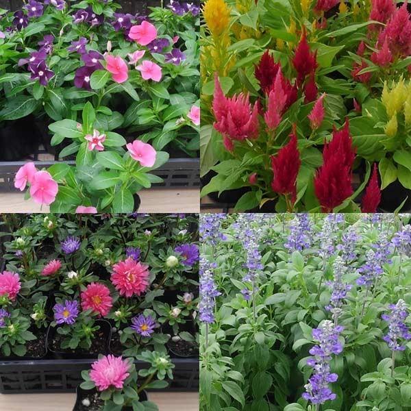 おまかせ 季節の苗9株セット 季節 入荷に応じて花苗を出荷させていただきます
