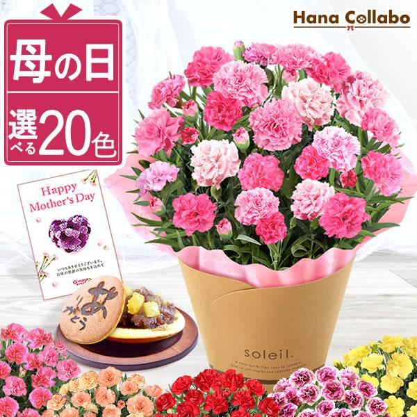 母の日ギフト  花 カーネーション 鉢植え プレゼントランキング  花とスイーツセット 花束 |hana-collabo