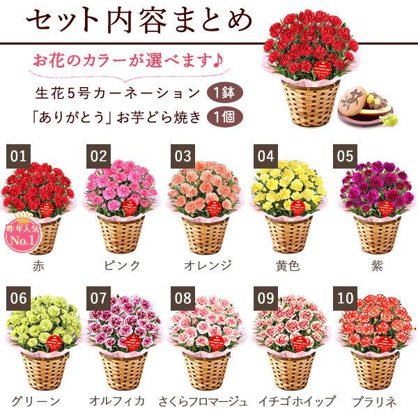 母の日ギフト  花 カーネーション 鉢植え プレゼントランキング  花とスイーツセット 花束 |hana-collabo|02