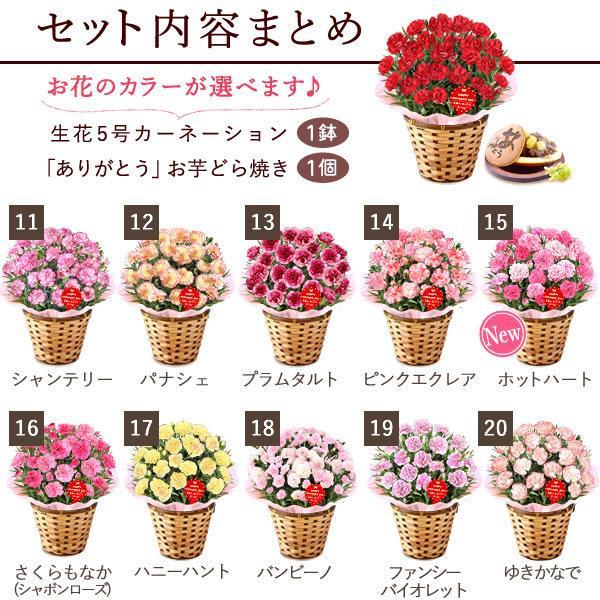母の日ギフト  花 カーネーション 鉢植え プレゼントランキング  花とスイーツセット 花束 |hana-collabo|03