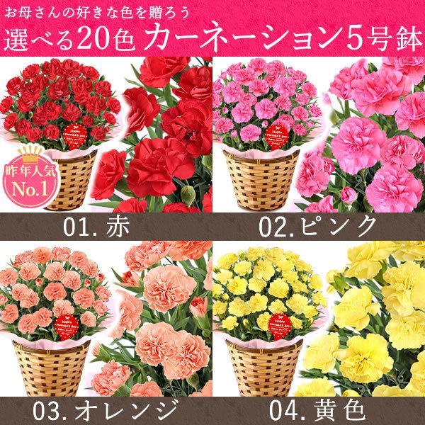 母の日ギフト  花 カーネーション 鉢植え プレゼントランキング  花とスイーツセット 花束 |hana-collabo|06