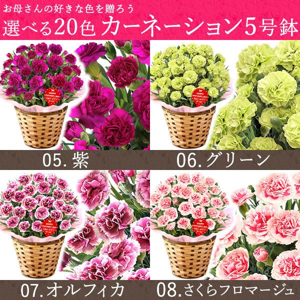 母の日ギフト  花 カーネーション 鉢植え プレゼントランキング  花とスイーツセット 花束 |hana-collabo|07