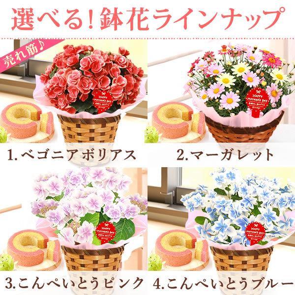 母の日 ギフト 2019 mothersday フラワーギフト 鉢植え 花 お菓子|hana-collabo|02