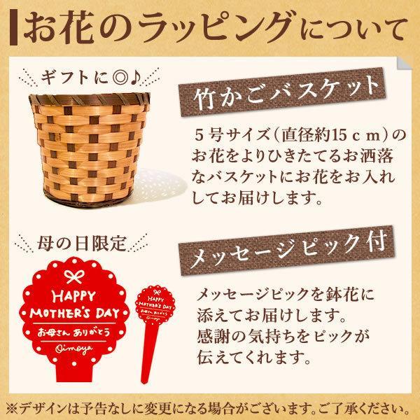 母の日 ギフト 2019 mothersday フラワーギフト 鉢植え 花 お菓子|hana-collabo|11