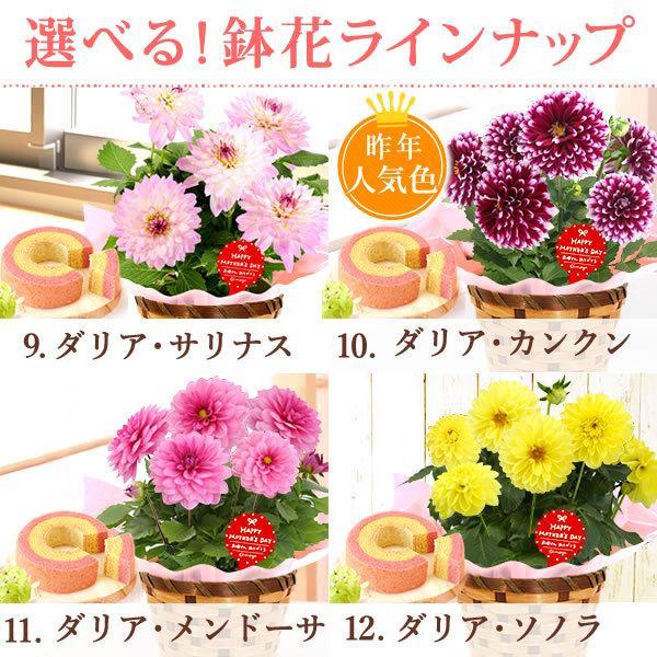 母の日 ギフト 2019 mothersday フラワーギフト 鉢植え 花 お菓子|hana-collabo|04