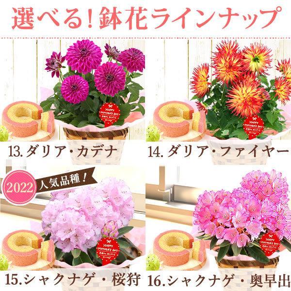 母の日 ギフト 2019 mothersday フラワーギフト 鉢植え 花 お菓子|hana-collabo|05