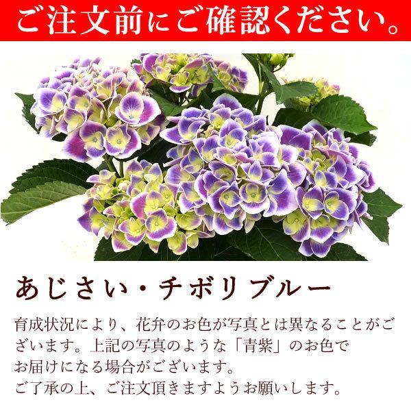 母の日 ギフト 2019 mothersday フラワーギフト 鉢植え 花 お菓子|hana-collabo|07