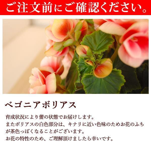 母の日 ギフト 2019 mothersday フラワーギフト 鉢植え 花 お菓子|hana-collabo|08