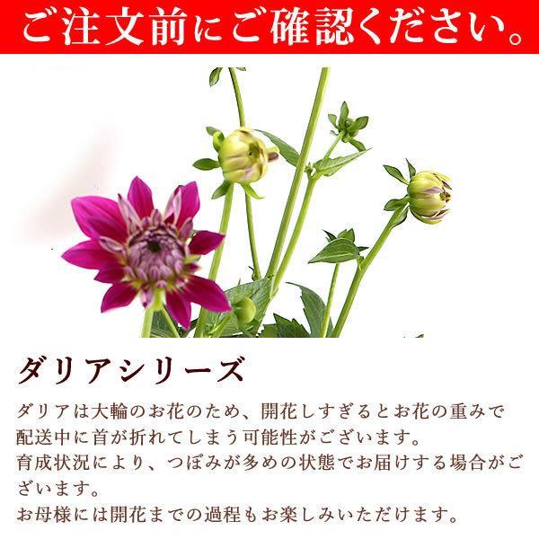 母の日 ギフト 2019 mothersday フラワーギフト 鉢植え 花 お菓子|hana-collabo|09