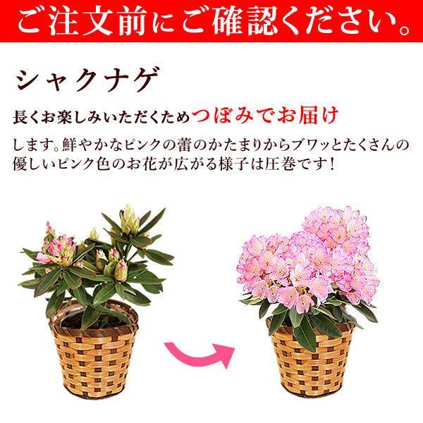 母の日 ギフト 2019 mothersday フラワーギフト 鉢植え 花 お菓子|hana-collabo|10