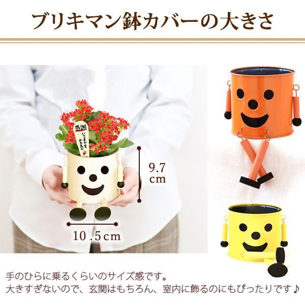 母の日 花 ギフト 2019 mothersday 鉢植え スイーツ カーネーション以外|hana-collabo|11
