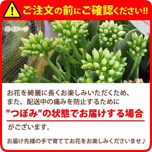 母の日 花 ギフト 2019 mothersday 鉢植え スイーツ カーネーション以外|hana-collabo|05