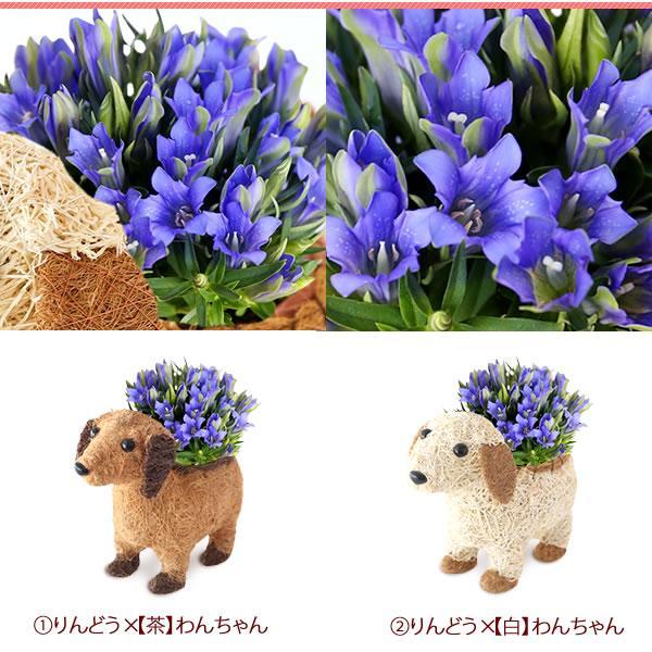 母の日 花 ギフト 2019 mothersday 鉢植え スイーツ カーネーション以外|hana-collabo|07