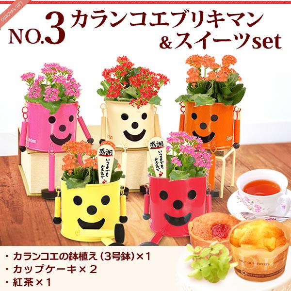 母の日 花 ギフト 2019 mothersday 鉢植え スイーツ カーネーション以外|hana-collabo|09