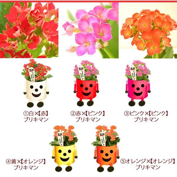 母の日 花 ギフト 2019 mothersday 鉢植え スイーツ カーネーション以外|hana-collabo|10