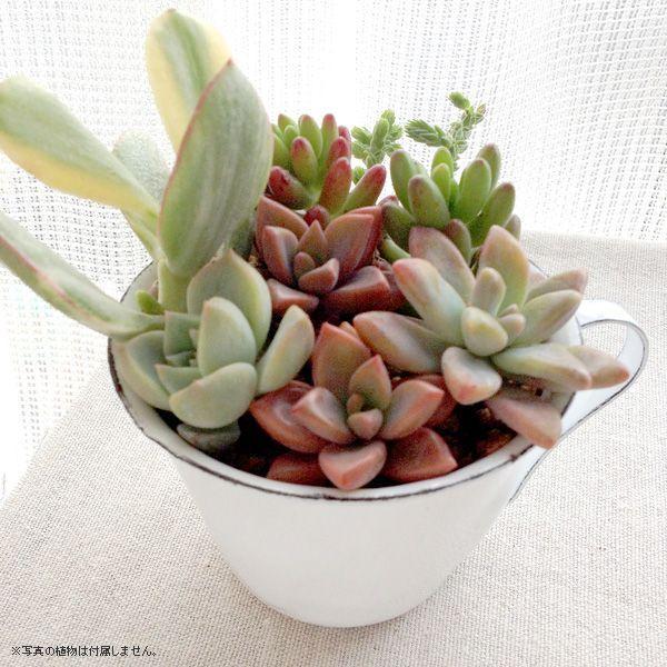鉢カバー ホーロー 白いカップの形のエナメル・スモールカップポット|hana-kazaru