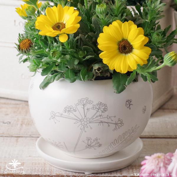 プランター おしゃれ 植木鉢 植物柄のまあるいプランター 約4.5号 受け皿付|hana-kazaru