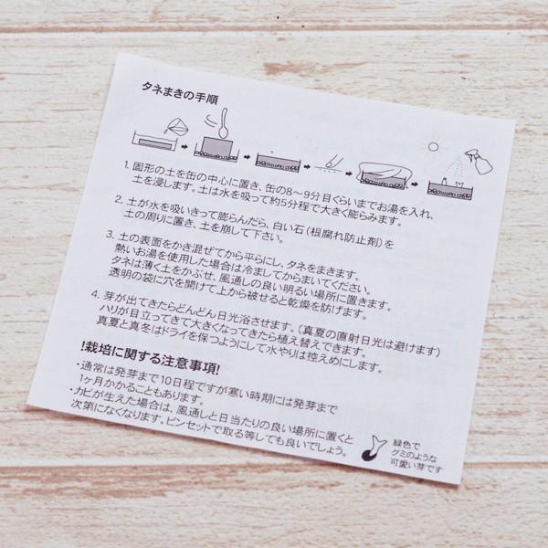 サボテン 種 リトルガーデン サボテン栽培キット缶 MIX CACTUS ミックス カクタス|hana-kazaru|03
